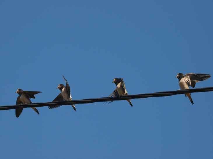Ptice i žice