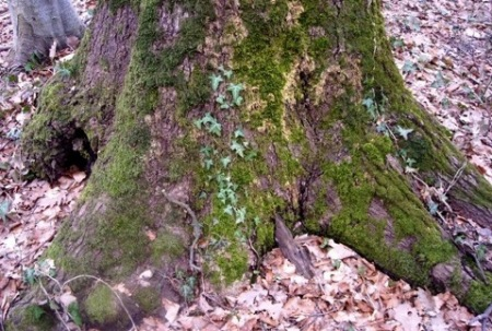 Kad nam šuma govori...