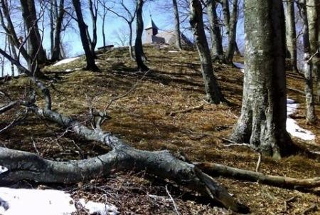 Kako svjesni boravak u šumi može promijeniti tijek stvari