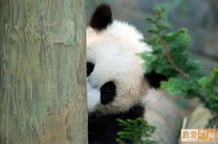 Panda vrtić