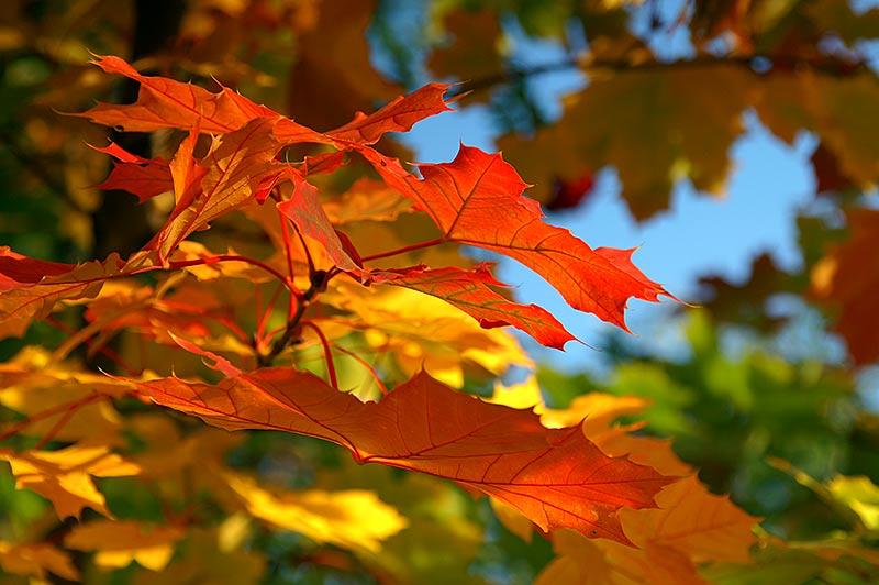 Ugođaj jeseni .....