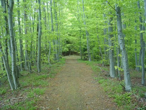 Praznik  u zagrljaju šume