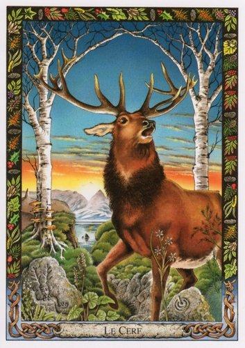 Vrste karata za proricanje: Druid Animal Oracle