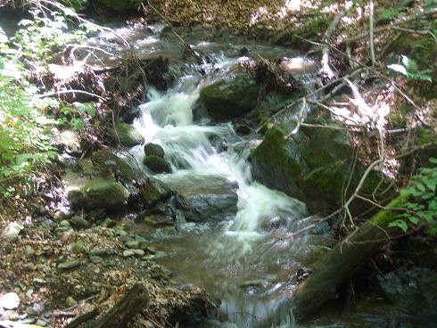 Žuborava šuma