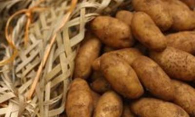 Krumpir: beskorisno povrće ili dar prirode?