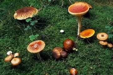 Počela je sezona gljiva - budite oprezni !