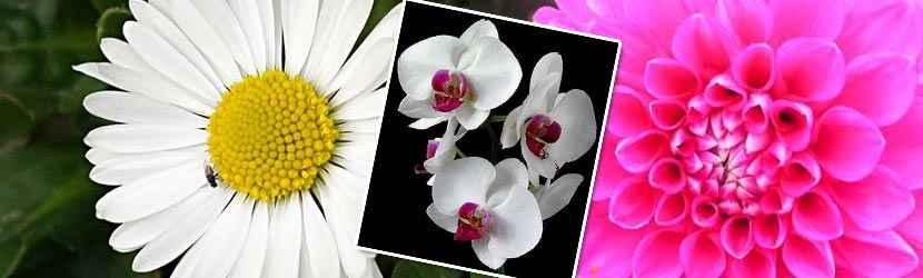 Floriografija - jezik cvijeća