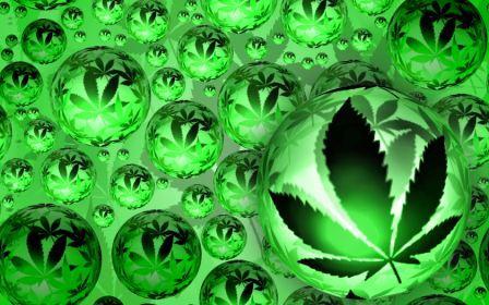 Marihuana, canabis, konoplja