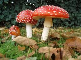 Otrovanje gljivama(micetizam)