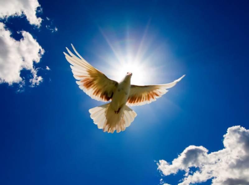 PAKLENI ZMAJ ŠIBA ČAK I ZVIJEZDE NEBESKE