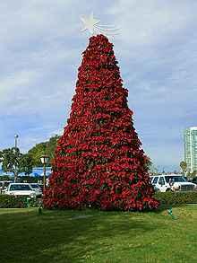 Božićno drvce III dio (slike)