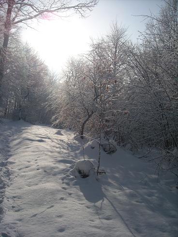 Šumsko snježno ruho