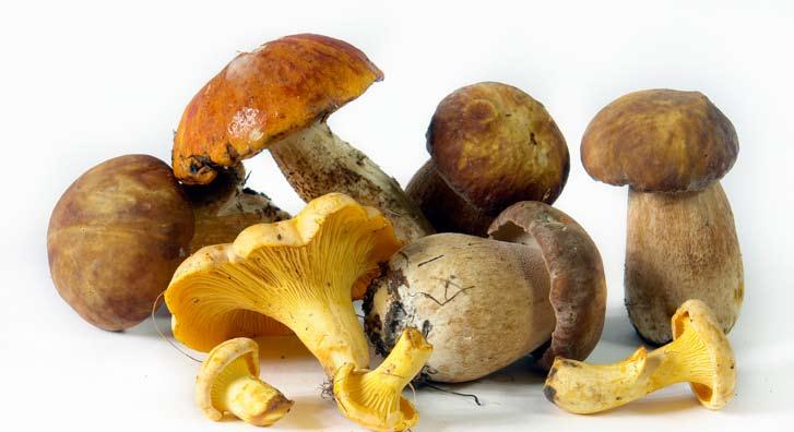 Torta od gljiva - Jasenka Ljubičić
