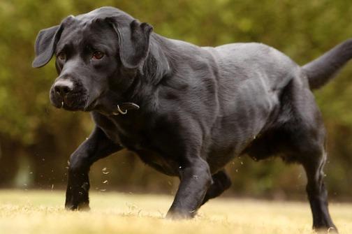 Psi otkrivaju određene vrste karcinoma s 90% sigurnosti