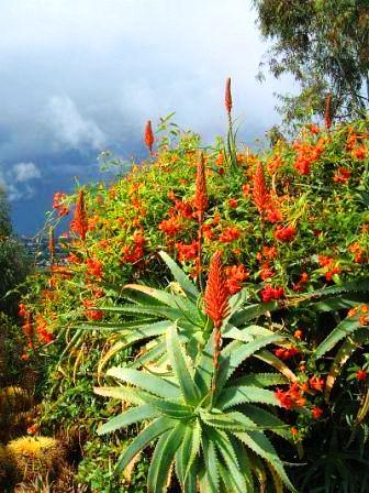 Aloe Vera - omiljena biljka Aleksandra Velikog