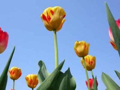 Kelti su slavili proljeće kao uskrsnuće sunca