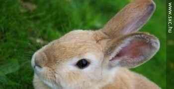 Kakve veze imaju zečić i jaja s Uskrsom?