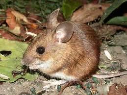 POUČNE PRIČE - Bajka o jednom mišu