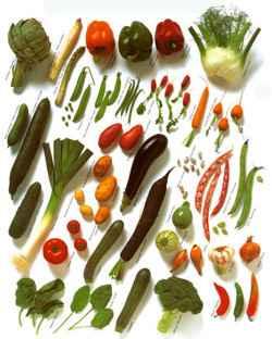 Osnove vegetarijanstva