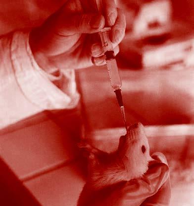 Suvremeno eksperimentiranje na životinjama - 4. Genetske bolesti