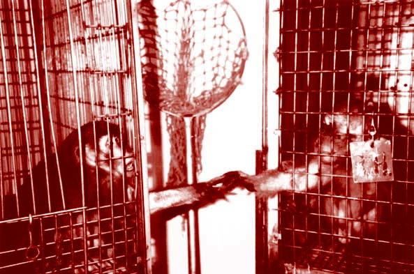 Zbog čega se pokusi na životinjama nastavljaju provoditi?