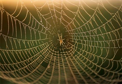 U paukovoj mreži II