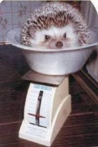 PRIČAO SAM TI + Sezona malih ježeva!