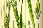 Ljekovite i djelotvorne tvari u pojedinim biljkama koje se nalaze u kozmetici Centella