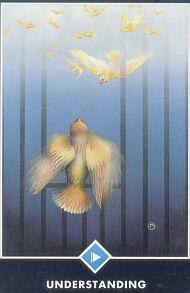 HAIKU - Ptica
