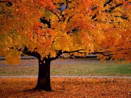 Neka me jesen ova , ogrli plaštom grimiznih boja....