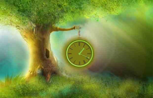 Dendroterapija - liječenje drvećem