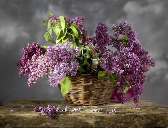 Čarolija je u cvijeću