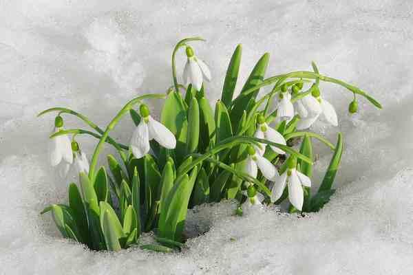 Valentinovo-oda proljeću