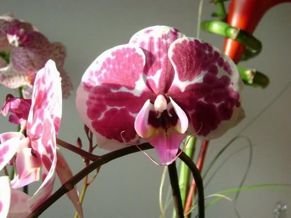 Beautifuls flowers