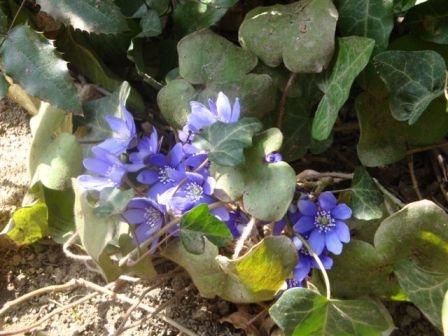 Dašak proljeća