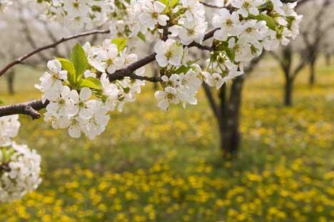 Od proljeća do proljeća