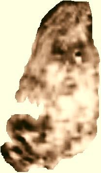 Ljudski lik na Mirandi, odlomak iz knjige: