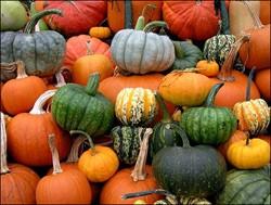 Plodovi jeseni - bundeva
