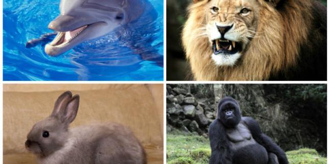 Sedam istinitih priča o životinjama koje su spasile ljude od sigurne smrti