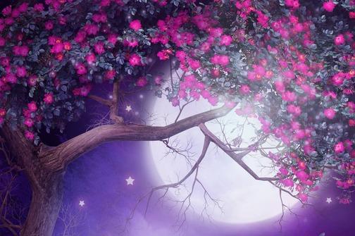 Keltski horoskop: Svatko ima svoje drvo po datumu rođenja