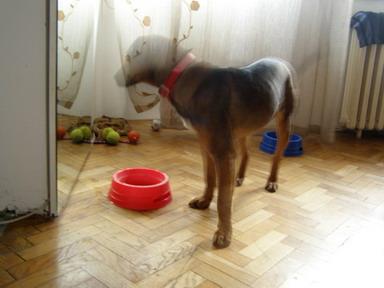 Napušteni pas traži vlasnika