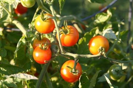 Želite saditi vlastito povrće? E, pa neće ići, kažu u EU