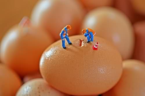 Traženje dlake u jajetu