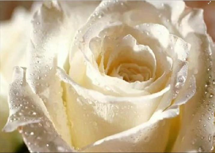 Barbara Streisand-Woman in love