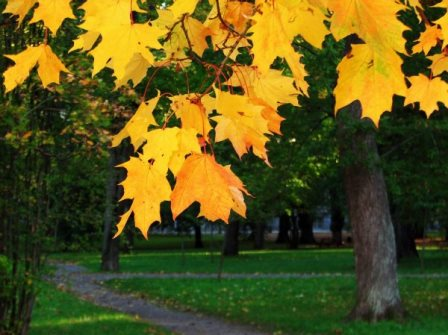 Jesen uz izreke