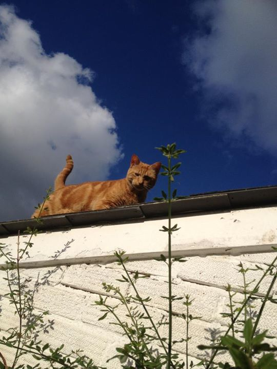 KRUH NAŠ VIRTUALNI, DAJ NAM DANAS..(maca na vrućem limenom krovu)...