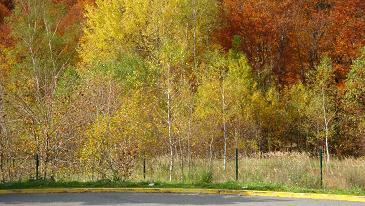 Sve boje jeseni