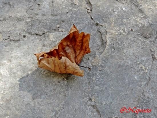 ....boje jeseni....
