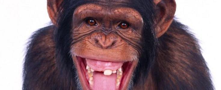 Nakon suza, malo smijeha- pogledajte što je napravio majmun kada je dobio pušku u ruke