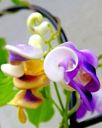 Egzotično cvijeće iz cijelog svijeta...